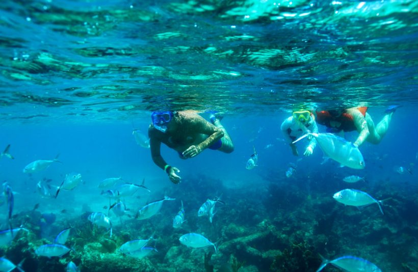 snorkel coral reef
