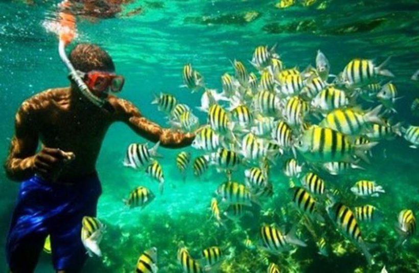 snorkel peces comida